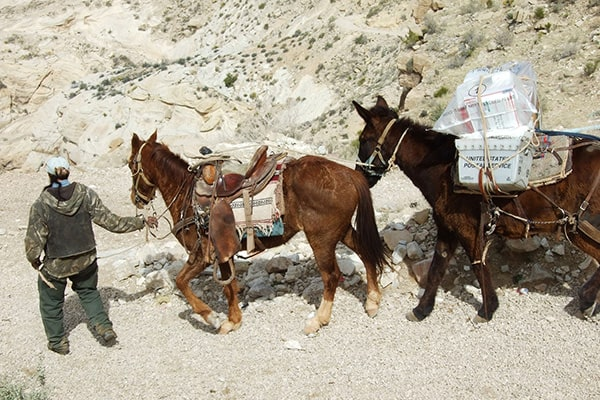 Grand Canyon Postal Service Mule Mail