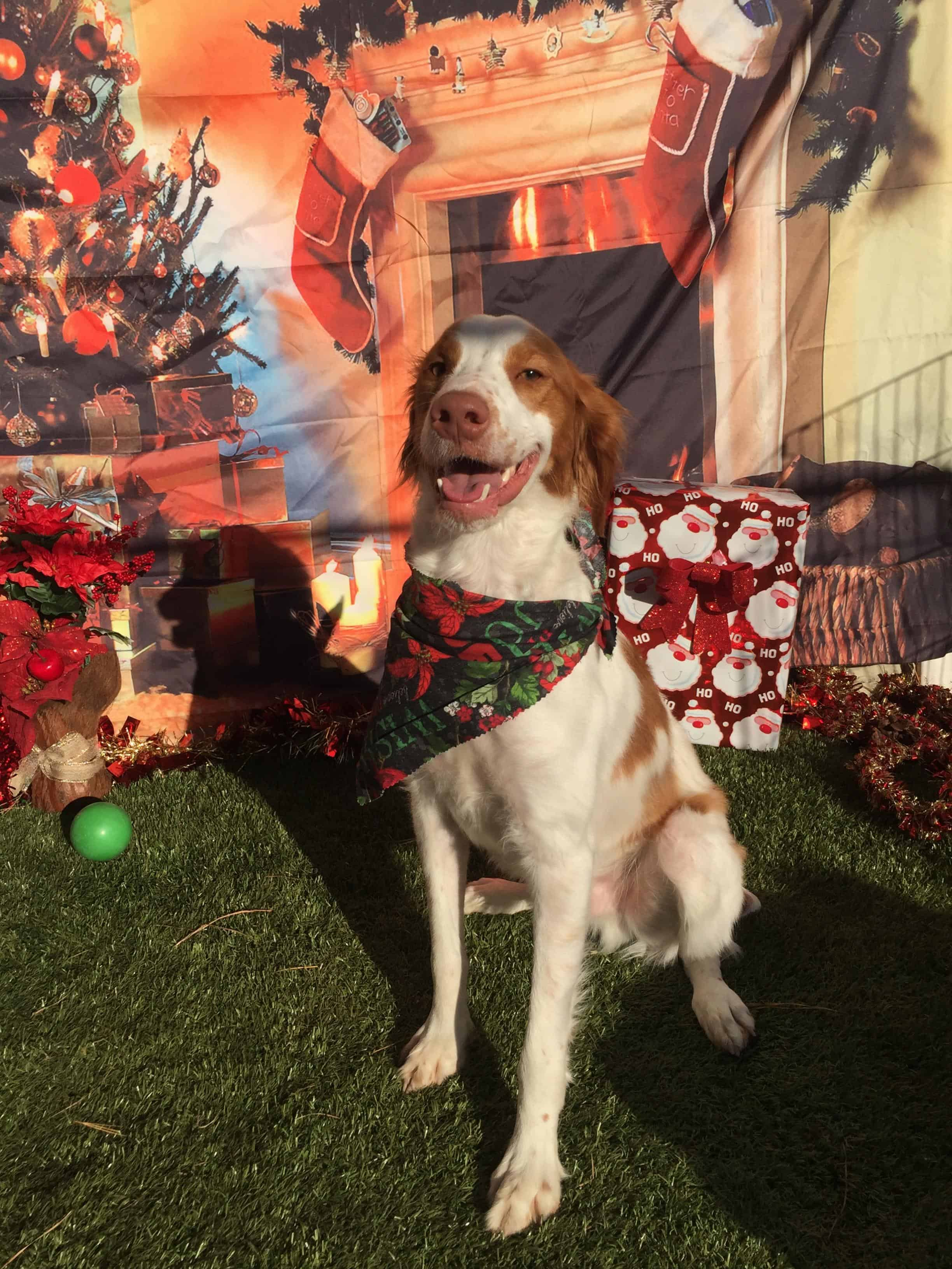 Cooper Awaiting Santa Paws 2017