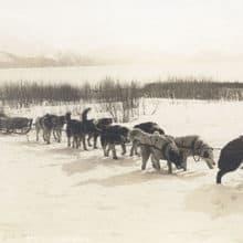 Alaskan Dog Sled Mail Carrier