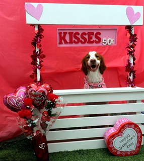Cooper's Valentines Kisses Booth 2018