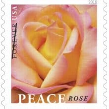 First Day of Spring 2018 & Upcoming Peace Rose Forever Stamp