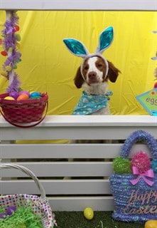 Cooper Wrapping up Easter Greetings 2018