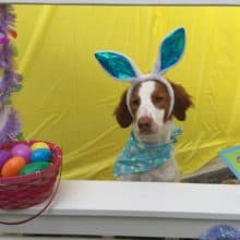 Cooper's Easter Greetings 2018