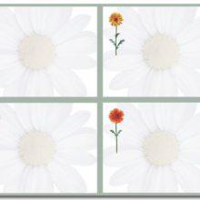 Springtime Daisies 4 Up Postcard