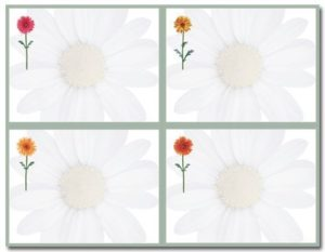 Daisies 4 Up Postcard