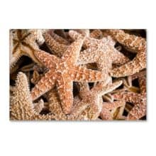 Pursuing Starfish Postcards Collection