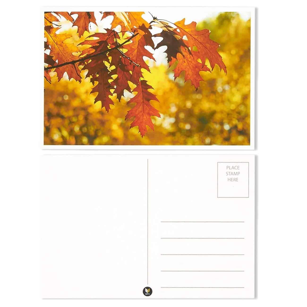 Four Seasons Variety Pack Postcards