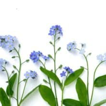 Bottle Branch Forget Me Not Note Card Botanical Art Stationery