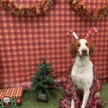 Cooper's Dear Santa Paws 2018 Christmas Letter