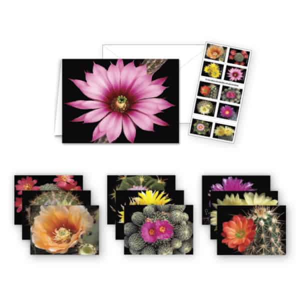 USPS Cactus Flower Notecards Stationery Set