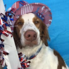 Cooper's Happy July 4 2019
