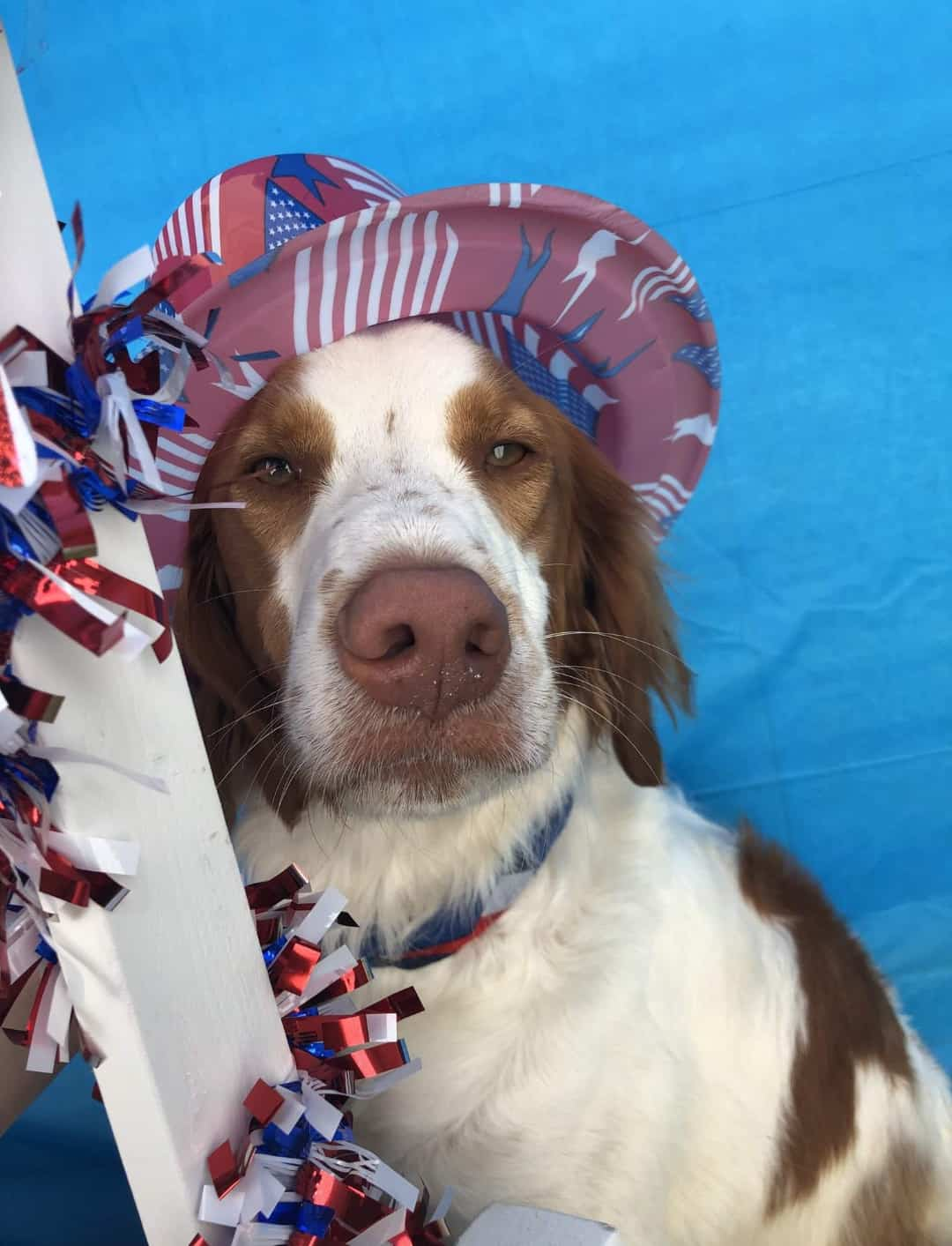 Cooper's Happy July 4 2019