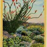 Vintage Southwest Postcard – When the Desert Blooms