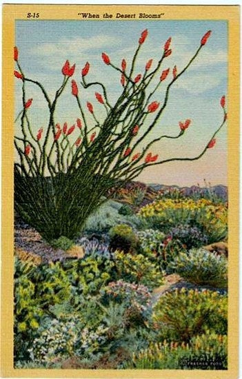 Vintage Southwest Postcard – When the Desert Blooms
