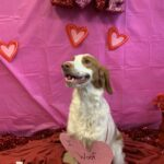 Cooper Valentines Day Greetings 2020 & LOVE of Letter Writing!