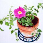 Petunia Watercolor Note Cards
